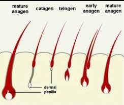 What is the minimum hair fall rate of a man per day Quora