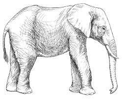 Abstract Elephant Colouring Pages