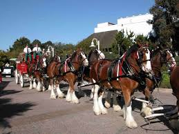 Grants Farm St Louis Halloween by Grants Farm The Home Of The Budweiser Clydesdales St Louis