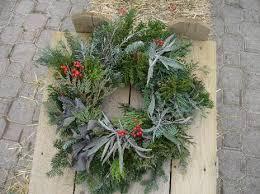 Plantable Christmas Trees Columbus Ohio christmas is great at lodi farms nursery