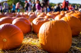 Toms Pumpkin Farm Huntley by Oc Calendar Of Events Oct 2017 Frank Velasco