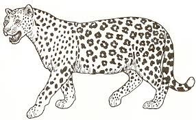 Leopard Print Colouring Pages