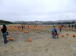Glendale Pumpkin Patch by The Cal Poly Pumpkin Festival U0026 The Sacred Heart Festival Left