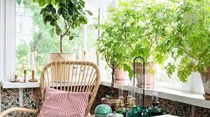 pflanzen für die fensterbank finde die richtige otto