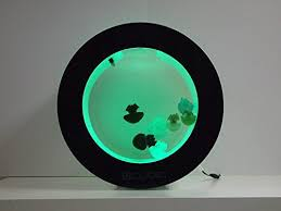 Jellyfish Mood Lamp Amazon by Desktop Jellyfish Aquarium Cool Stuff On Amazon