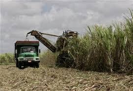 Cuban Sugar Recovery Dealt Big Blow By Ike And Gustav