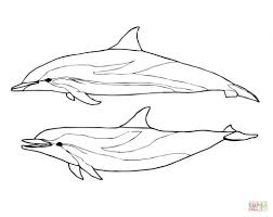 Dolphins Coloring Pages Two Striped Dolphin Picture To Color And Print Large Size