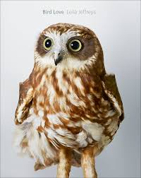 9 Beautiful Portraits Of Rescued Owls - Atlas Obscura White Screech Owl Illustration Lachina Bbc Two Autumnwatch Sleepy Barn Owl Yoga Bird Feeder Feast And Barn Wikipedia Attractions In Cornwall Sanctuary Wishart Studios Red Eastern By Ryangallagherart On Deviantart Owlingcom Biology Birding Buddies 2000 Best 2 Especially Images Pinterest Screeching Youtube