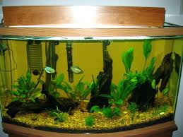 Aquascaping Forum Favourites By Very Nice Triangular Appartment ... 329 Best Aquascape Images On Pinterest Aquarium Ideas Floratic Visiting Paradise At Shah Alam Planted Aquarium Aquascape Things Aquariums Aquascaping Malaysia Diy Pertama Kali Aquascaping October 2010 Of The Month Ikebana Aquascaping World Sumida Aquarium Reloaded Fish Tanks And Designs Awesome A Moss Experiment Its All About Current Low Tech Tank Cuisine Wonderful Small Cubical Styles Planted The Surreal Submarine Amuse