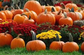 Where Did Pumpkin Patch Originate by Russell Farms Pumpkin Patch Home Facebook