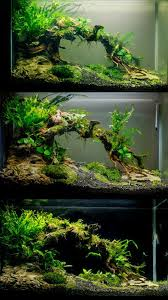 Betta Fish Tank Setup Ideas That Make A Statement