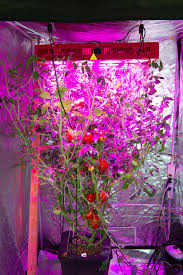 led grow lights our projects boiling frog productions