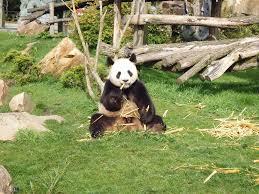 chambre d hote pres du zoo de beauval hotels chambres d hôtes locations de vacances et appartements à