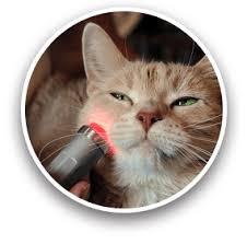 light therapy photonic health llc