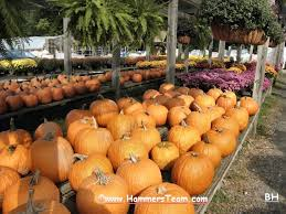 Pumpkin Picking Nj by Holiday Happenings Emerson U0026 River Vale New Jersey
