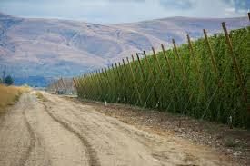 Saranac Pumpkin Ale Calories by Founders Backwoods Returns In 12oz U0026 750ml Bottles