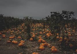 Pumpkin Patch College Station 2014 by Pumpkins Patch Farm