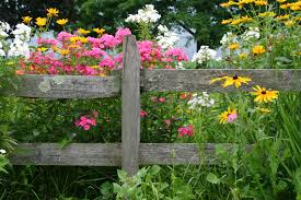An Old Rustic Fence With Weather Damage And A Bright Array Of Wild Flowers Popping Up