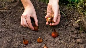 when to plant bulbs for 6 things you should bt