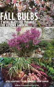 3 more beautiful plant pairings for fall blooming bulbs pith vigor