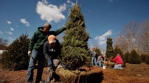 Realistic Artificial Christmas Trees Nz by Are Real Or Artificial Christmas Trees Better For The Environment