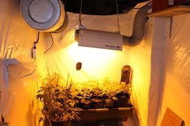 chambre de culture cannabis complete électricité et mesures de sécurité graines de