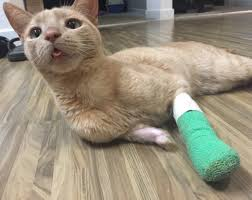 cost to declaw cat the declawing list that they don t want you to see city the
