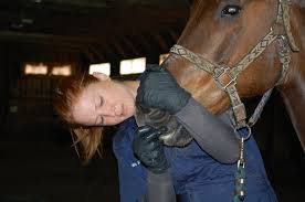 Horse dentist Sara Twickler of Sunderland helps with horses top