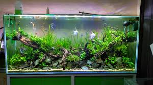 Aquascape Design | MiniaKuarium.com September 2010 Aquascape Of The Month Sky Cliff Aquascaping How To Set Up A Planted Aquarium Design Desiging Tank Basic Forms Aqua Rebell Suitable Plants With Picture Home Mariapngt Nature With Hd Resolution 1300x851 Designs Unique Hardscape Ideas And Fnitures Tag Wallpapers Flowers Beautiful Garden Best 25 Aquascaping Ideas On Pinterest From Start To Finish By Greg Charlet