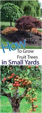 Backyards : Splendid 97 Best Fruit Trees To Grow In Backyard Cool ... Garden Design Trees For Traing Adds Beauty And Function Inside 90 Best Fruit Images On Pinterest Trees Backyards Best 25 Fast Growing Fruit Ideas Tree Wonderful Large Backyard Plum Tree Pics Orchards Benicia Community Gardens With With Cclusion How To Grow Which Apple For Small Garden 35 Citrus Homegrown Stone Sunset Mobile Enjoy The Full Of Flowers Alamedasan