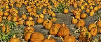 Half Moon Bay Pumpkin Patch 2017 by Halloween U0026 Pumpkin Season Visit Half Moon Bay