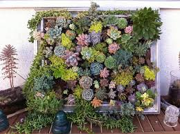 View In Gallery Hanging Succulent DIY Garden From Vintage Frame