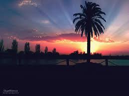 Palm Tree Sunset By MyLandOfMakeBelieve On DeviantArt