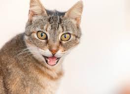 cisapride for cats chlorambucil pet and cat medication and prescription list