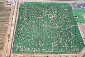 El Paso Pumpkin Patch 2014 by Find Corn Mazes In Texas Longest U0026 Best Corn Mazes And Halloween