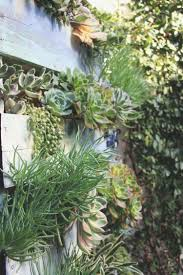 Succulent Cafe Oceanside Vertical Pallet Garden Via Needles Leaves