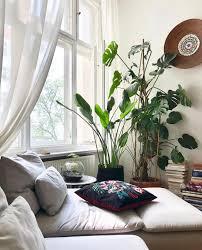 pflanzen wohnzimmer caseconrad