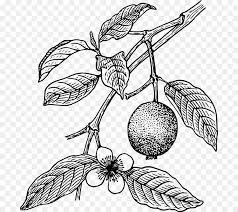 Juice Guava Tropical fruit Tree Clip art Canned Food Clipart