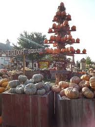 Dills Pumpkin Patch Columbus Ohio by 17 Best Around The 200 Acres Images On Pinterest Homesteads