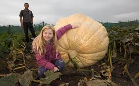 Heaviest Pumpkin Ever by Giant Pumpkin Grown From U0027most Expensive U0027 Seed Expected To Break