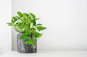 pflanzen fürs bad 10 arten für die wellnessoase plantura
