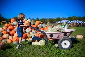 Pumpkin Patch Near Cincinnati Oh by 5 Reasons Your Family Will Love Fall On The Farm At Blooms