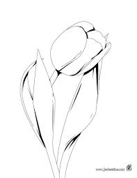 Dessins Gratuits à Colorier Coloriage Tulipe à Imprimer