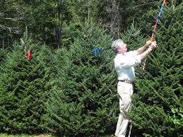 Christmas Tree Farm For Sale Boone Nc by Cartner Christmas Tree Farm Buy Wholesale