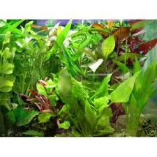 lot de 13 touffes de plantes aquatique pour aquarium aquafloral