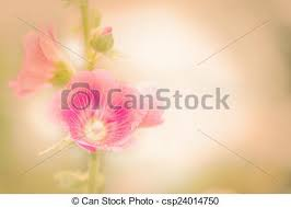 Holly Hock Flowers Hollyhock Pink Vintage Retro Pastel Style Soft Background Stock Photo