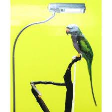 zoo med avian sun deluxe floor l in use cage bird lighting