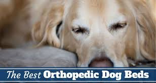 the best orthopedic dog beds in 2017 perfect for golden retrievers