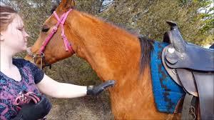Horse Hair Shedding Blade by Handson Gloves Grooming Bathing Massage U0026 De Shedding Horses Dogs