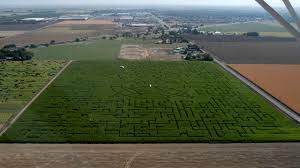 Marana Pumpkin Patch Field Trip by Corn Maze Pumpkin Patch Madera Developersbydesign